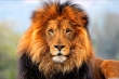 Tử vi ngày 14/6 của 12 cung hoàng đạo: Sư Tử dễ rơi vào cảnh nợ nần
