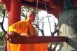 Không bắn pháo hoa, Hà Nội khuyến khích nhà thờ, đền chùa rung chuông đêm Giao thừa