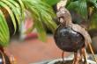 Ngắm bonsai dừa tạo hình con vật ở TP.HCM
