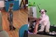 Ảnh: Độ 'ngáo' của thú cưng khiến ông bà chủ 'đứng hình'
