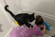 Bật cười xem những chú mèo 'bon chen' đòi tắm với chủ