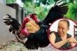 Kỳ nhân Nguyễn Bảo Sinh và 'thần kê' Ô Mướp
