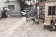 Clip: Chú chó thông minh mở cổng cho ô tô vào