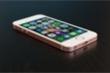 iPhone SE 2 sẽ ra mắt vào năm 2020, anten 'xịn' hơn cả iPhone 8?