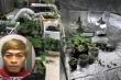 Bắt giữ nam thanh niên thuê nhà trọ trồng cần sa giữa Thủ đô