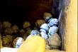 Hàng trăm hũ tro cốt ở chùa Kỳ Quang 2: Phí xét nghiệm ADN lên tới 5 tỷ đồng?