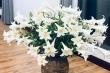 Hoa loa kèn đầu mùa vừa đắt vừa hiếm, chị em Hà Nội vẫn tới tấp lùng mua
