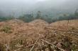 Lào Cai khởi tố 10 kẻ phá rừng