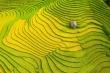 Sapa mùa lúa chín: Vắng lặng nhưng vẫn đẹp rực rỡ sắc vàng