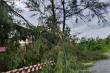 Bão số 5 quét qua Huế: Quật cây xanh bật gốc nằm la liệt, cuốn phăng mái nhà dân