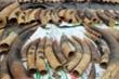 Phát hiện hơn 7 tấn ngà voi và vảy tê tê ngụy trang trong container nhựa đường