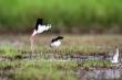 Video: Ngắm những loài chim hoang dã ngay tại Hà Nội