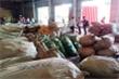 Hơn 100 tấn thảo dược đội lốt củ cải, cà rốt nhập lậu từ Trung Quốc về Đà Nẵng