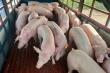 Thịt lợn nhập khẩu gặp khó, hải quan chỉ đạo gỡ rối