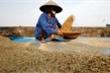 Covid-19 có thể gây thiếu lương thực toàn cầu