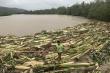 Video: Bão Molave đổ bộ Philippines, tàn phá nhiều nhà cửa, hoa màu