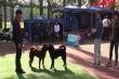 Chó Bắc Hà, Mông Cộc, Phú Quốc tham dự 'hội thi sắc đẹp' ở Hà Nội