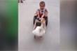 Clip: Ngỗng kéo xe chở em bé đi chơi