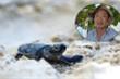 Hành trình xúc động đưa trứng rùa biển từ Côn Đảo về Cù Lao Chàm ấp nở của 'vua rùa'