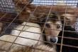 Dù không bỏ ăn thịt chó, xin hãy nghĩ đến điều này để không phạm vào nghiệp ác