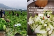 Nhận được rau 'lạ' cứu trợ, dân Vũ Hán loay hoay tìm cách nấu