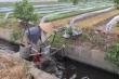 Cận cảnh công nghệ sản xuất rau tưới bằng nguồn nước ô nhiễm