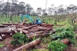 Để mất rừng, 6 tập thể và 119 cá nhân ở Lâm Đồng bị kỷ luật