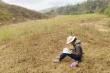 Học sinh leo đồi cao vừa chăn bò vừa dò sóng điện thoại học online mùa dịch