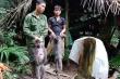 Săn bắn voọc xám quý hiếm, 5 nam thanh niên lĩnh gần 14 năm tù