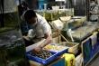 Trung Quốc phát hiện nCoV trên bao bì tôm nhập khẩu từ Ecuador