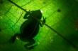 Tìm thấy hóa thạch của loài ếch quý hiếm 2 triệu năm tuổi
