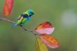 Vẻ đẹp rực rỡ của các loài chim trong rừng nhiệt đới Nam Mỹ