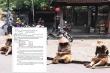 Nhóm đóng giả ăn xin gửi thư xin lỗi chính quyền và nhân dân Hội An