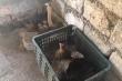 Video: Gà mẹ tung đòn hiểm, đánh bại 2 rắn hổ mang để bảo vệ đàn con