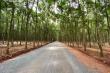 Chủ tịch Bình Phước yêu cầu làm rõ con đường bỏ nhà dân đi thẳng vào rừng cao su