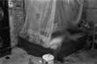 Bắt giữ tên chồng sát nhân ở Hà Nội
