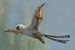 Bay kém, lướt gió nửa vời, loài khủng long có cánh sớm tuyệt chủng