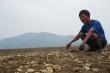 Ngao chết hàng loạt ở Hà Tĩnh do sốc nước ngọt
