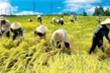 Thủ tướng đồng ý cho xuất khẩu gạo trở lại