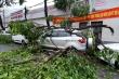 Video: Cây đổ ngổn ngang, đè hàng loạt ô tô sau mưa giông ở Cần Thơ