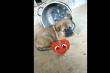 Ai nỡ giết, ăn thịt chó hãy xem video này, có lương tâm sẽ từ bỏ
