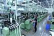 COVID-19 ở Ấn Độ phức tạp, doanh nghiệp Việt cần chú ý gì?
