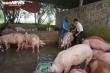Giá thịt lợn tại chợ lại cao ngất, tăng theo giá hơi