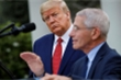 Cố vấn cảnh báo nguy cơ bùng phát COVID-19, Tổng thống Trump chỉ trích gay gắt