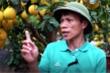 Ảnh: Bưởi Diễn trưng Tết xuống phố Sài Gòn, giá giảm một nửa do dịch COVID-19