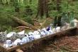 Bí ẩn ngôi làng Nhật Bản bị bỏ hoang giữa rừng ở Canada