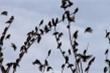 Người thợ săn bắn rơi bao nhiêu con chim?