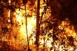 Truy tặng Huân chương dũng cảm cho người phụ nữ thiệt mạng khi chữa cháy rừng