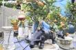 Chưa đến Tết Tân Sửu, quất bonsai trĩu quả đã đắt hàng