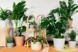 9 loại cây cảnh giúp giải độc không khí trong nhà bạn